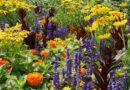 Jak prawidłowo nawozić rośliny kwitnące?