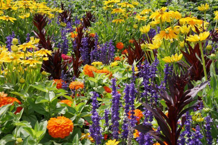 Jak prawidłowo nawozić rośliny kwitnące
