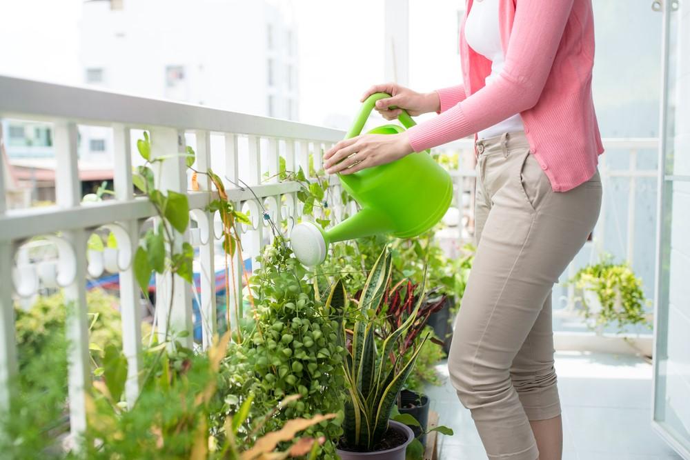 Wyjezdzasz Na Urlop Sprawdz Jak Zabezpieczyc Kwiaty Dekotime