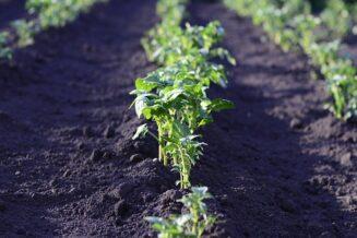 Jakie rośliny możesz posadzić w tunelu foliowym jesienią?