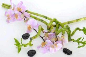 Feng Shui w Ogrodzie – praktyczne porady
